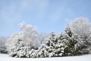 winter1-30-09 046